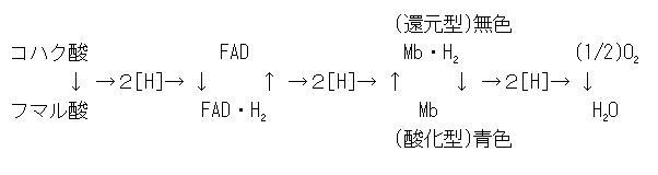 MAkasaka's Homepage | 高校せい...